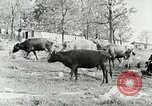 Image of dairy farm Berea Kentucky United States USA, 1933, second 13 stock footage video 65675021270