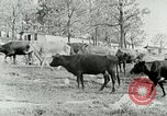 Image of dairy farm Berea Kentucky United States USA, 1933, second 14 stock footage video 65675021270