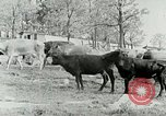 Image of dairy farm Berea Kentucky United States USA, 1933, second 15 stock footage video 65675021270