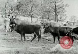 Image of dairy farm Berea Kentucky United States USA, 1933, second 17 stock footage video 65675021270
