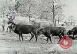 Image of dairy farm Berea Kentucky United States USA, 1933, second 18 stock footage video 65675021270
