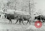 Image of dairy farm Berea Kentucky United States USA, 1933, second 19 stock footage video 65675021270