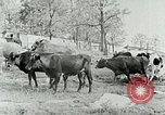 Image of dairy farm Berea Kentucky United States USA, 1933, second 20 stock footage video 65675021270