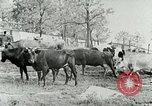 Image of dairy farm Berea Kentucky United States USA, 1933, second 21 stock footage video 65675021270