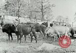 Image of dairy farm Berea Kentucky United States USA, 1933, second 22 stock footage video 65675021270