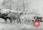 Image of dairy farm Berea Kentucky United States USA, 1933, second 23 stock footage video 65675021270