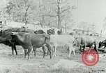 Image of dairy farm Berea Kentucky United States USA, 1933, second 24 stock footage video 65675021270