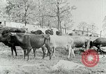 Image of dairy farm Berea Kentucky United States USA, 1933, second 25 stock footage video 65675021270