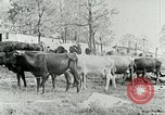 Image of dairy farm Berea Kentucky United States USA, 1933, second 26 stock footage video 65675021270