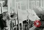 Image of dairy farm Berea Kentucky United States USA, 1933, second 28 stock footage video 65675021270