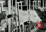 Image of dairy farm Berea Kentucky United States USA, 1933, second 29 stock footage video 65675021270