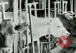 Image of dairy farm Berea Kentucky United States USA, 1933, second 30 stock footage video 65675021270