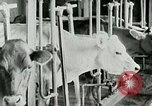 Image of dairy farm Berea Kentucky United States USA, 1933, second 31 stock footage video 65675021270