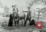 Image of dairy farm Berea Kentucky United States USA, 1933, second 41 stock footage video 65675021270