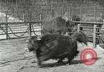 Image of wild animals United States USA, 1921, second 32 stock footage video 65675021528