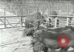 Image of wild animals United States USA, 1921, second 33 stock footage video 65675021528