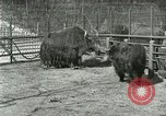 Image of wild animals United States USA, 1921, second 34 stock footage video 65675021528