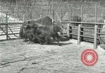 Image of wild animals United States USA, 1921, second 35 stock footage video 65675021528