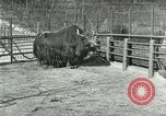 Image of wild animals United States USA, 1921, second 37 stock footage video 65675021528