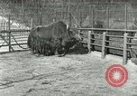 Image of wild animals United States USA, 1921, second 38 stock footage video 65675021528