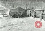 Image of wild animals United States USA, 1921, second 39 stock footage video 65675021528
