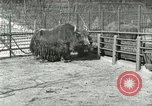 Image of wild animals United States USA, 1921, second 40 stock footage video 65675021528