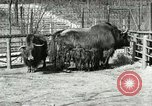 Image of wild animals United States USA, 1921, second 43 stock footage video 65675021528