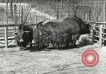 Image of wild animals United States USA, 1921, second 44 stock footage video 65675021528