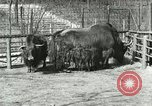 Image of wild animals United States USA, 1921, second 45 stock footage video 65675021528