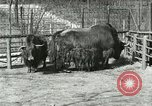 Image of wild animals United States USA, 1921, second 46 stock footage video 65675021528