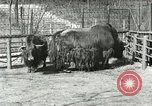 Image of wild animals United States USA, 1921, second 47 stock footage video 65675021528
