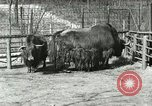 Image of wild animals United States USA, 1921, second 48 stock footage video 65675021528