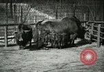 Image of wild animals United States USA, 1921, second 49 stock footage video 65675021528