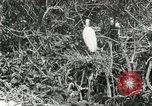 Image of wild birds United States USA, 1921, second 29 stock footage video 65675021529