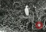 Image of wild birds United States USA, 1921, second 30 stock footage video 65675021529