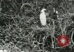 Image of wild birds United States USA, 1921, second 31 stock footage video 65675021529
