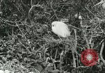 Image of wild birds United States USA, 1921, second 36 stock footage video 65675021529
