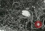 Image of wild birds United States USA, 1921, second 37 stock footage video 65675021529