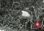 Image of wild birds United States USA, 1921, second 38 stock footage video 65675021529