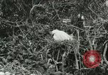 Image of wild birds United States USA, 1921, second 39 stock footage video 65675021529