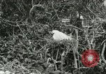 Image of wild birds United States USA, 1921, second 40 stock footage video 65675021529