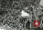 Image of wild birds United States USA, 1921, second 41 stock footage video 65675021529
