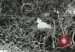 Image of wild birds United States USA, 1921, second 44 stock footage video 65675021529