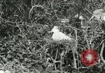 Image of wild birds United States USA, 1921, second 45 stock footage video 65675021529