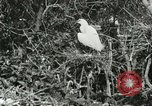 Image of wild birds United States USA, 1921, second 47 stock footage video 65675021529
