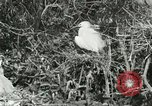 Image of wild birds United States USA, 1921, second 50 stock footage video 65675021529