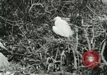 Image of wild birds United States USA, 1921, second 52 stock footage video 65675021529