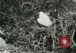 Image of wild birds United States USA, 1921, second 53 stock footage video 65675021529