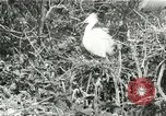 Image of wild birds United States USA, 1921, second 55 stock footage video 65675021529