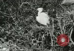 Image of wild birds United States USA, 1921, second 57 stock footage video 65675021529